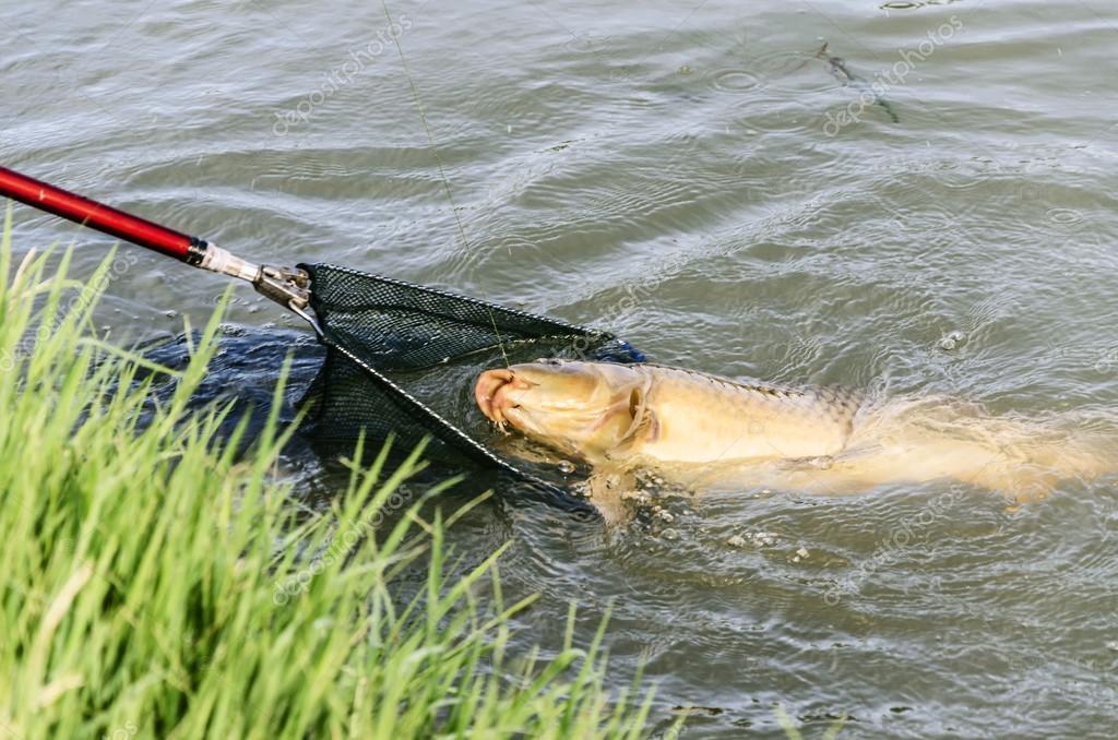 рыбалка на карпа все про рыбалку