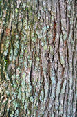 Bark detail close up — Foto de Stock