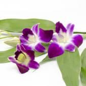 Vackra orkidé — Stockfoto