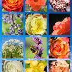 Flowers sampler — Stock Photo #65983907