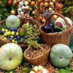 Summer harvest — Stock Photo #52436955