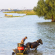 Man on a horse cart with a big container on Danube river — Stock Photo #53972769