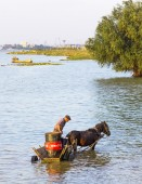 Man on a horse cart with a big container on Danube river — Stock Photo