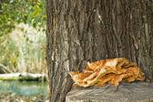 Svamp på trädstam — Stockfoto