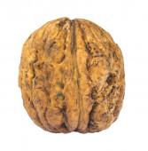 Single walnut isolated on white background — Stock Photo