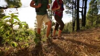 Hikers walking in forest. — Stock Video