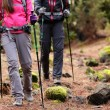 Hikers walking in forest with poles — Stok fotoğraf #62143977
