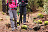 Hikers walking in forest with poles — Stock Photo