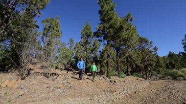 Hikers walking in mountain forest — Stock Video