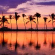 Beach sunset landscape with palm trees — Stock Photo #72655251