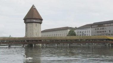 Lucerne Switzerland water tower and swans — Stock Video