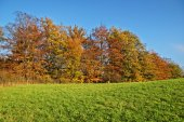 Deciduous trees colorful autumn colors of orange on the horizon green meadows — Stock Photo
