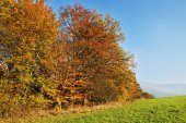 Deciduous trees colorful autumn colors of orange on the horizon green meadows — Fotografia Stock