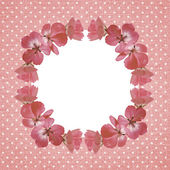Pink frame with geranium flowers — Stockfoto