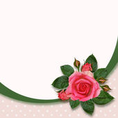 Rose flowers and frame — Stock Photo