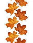Fall leaves line — Stock Photo