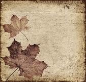 秋天的叶子背景 — 图库照片