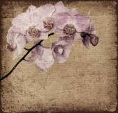 Old background with orchid flowers — Stock Photo