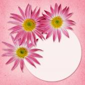 Aster flowers and a round frame — 图库照片