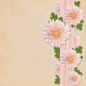 Aster flowers on pink background — ストック写真