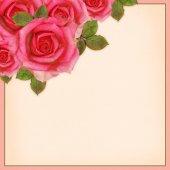 Rose flowers corner — Stock Photo
