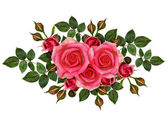 Pink rose flowers composition — Stock Photo