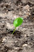 Plant grows symbolizes struggle and restart — Stock Photo