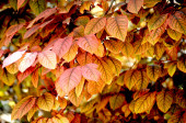Autumn leaf time seasonal — Stock Photo