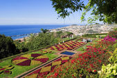 Botanical garden,funchal,madeira — Stock Photo