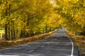 Lonley road autumn  — Stock Photo