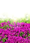Summer garden — Stock Photo