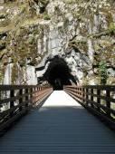 Dřevěný most vedoucí k tunelu — Stock fotografie