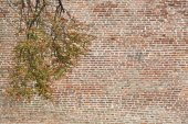 Treetop Branches and Old Brick Wall for Advertising — Stock Photo
