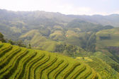 Rice terraced in Northern Vietnam — Stock Photo