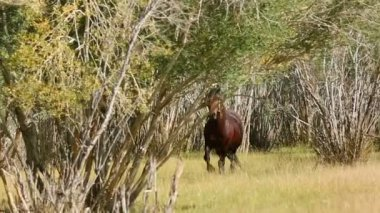 Brown Horse on Farm — Stock Video