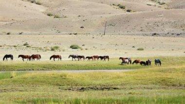 Herd of horses in meadow — Stock Video