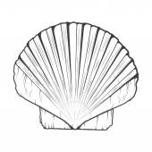 Sea Shell isolated on a white background. Monochromatic line art. Retro design. Vector illustration. — Stock Vector