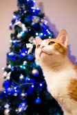 Christmas tree with a cat — Stock Photo