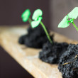Green sprout growing from seed. Spring symbol, concept of new life — Stock Photo #66000235