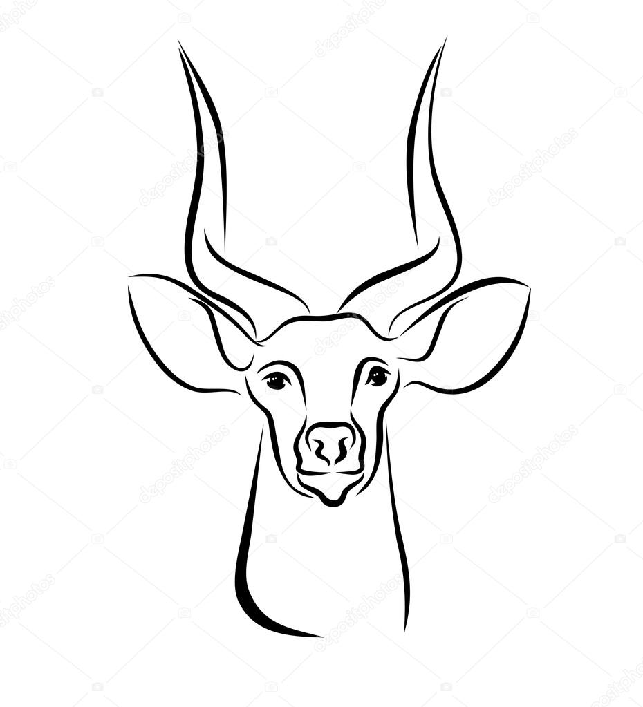 Antelope Face Drawing Hand Drawn Sketch