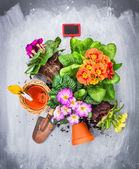 Primula flowers potting set with pots,shovel and red sign, top view — Stock Photo
