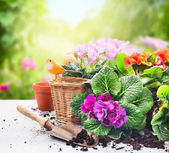 Gardening set on table with flowers, pots, potting soil and plants on sunny garden background — Stock Photo