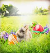 Easter card with  bunny,color eggs and flowers in garden grass — Stock Photo