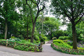 NEW YORK - Walking alleys among big trees in Central Park, New York City, USA — Stockfoto
