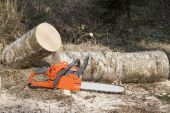The chainsaw, lumberjack felling — Stockfoto
