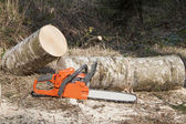 The chainsaw, lumberjack felling — Stock fotografie