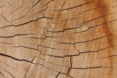 Wooden texture from the tree, plum-tree, growth rings — Stock Photo