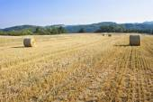 Round straw bales in harvested fields and blue sky without clouds. Beautiful countryside landscape. Dry landscape in the Czech Republic. Field in the morning sun. — Stock Photo
