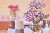 Sweet flower in fresh morning — Stok fotoğraf