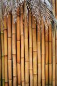 Bamboo wall — Stock Photo